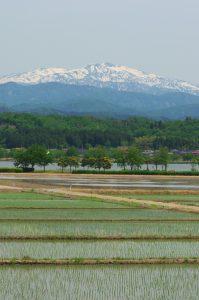 白山・木場潟(春)